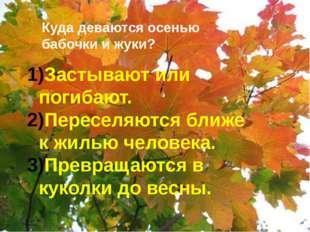 Куда деваются осенью бабочки и жуки? Застывают или погибают. Переселяются бл