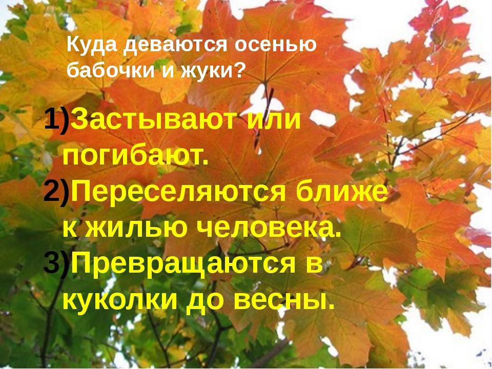 Куда деваются осенью бабочки и жуки? Застывают или погибают. Переселяются бл...