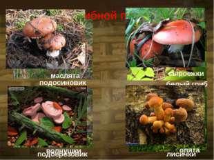 На грибной поляне подосиновик подберёзовик белый гриб лисички маслята волнушк