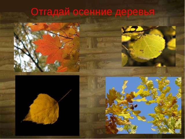Отгадай осенние деревья