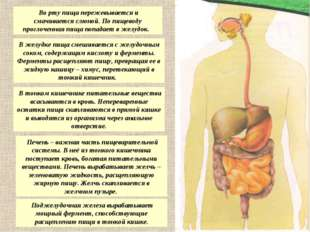 Во рту пища пережевывается и смачивается слюной. По пищеводу проглоченная пи