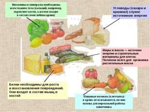 Витамины и минералы необходимы всем тканям тела (кальций, например, укрепляет