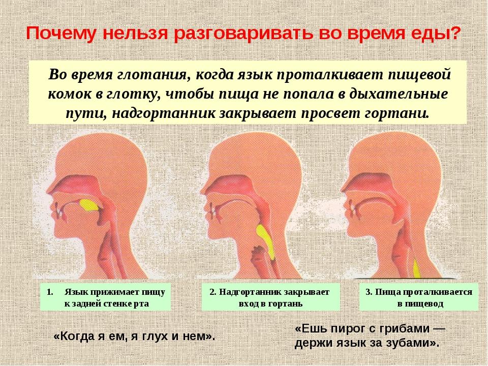 Во время глотания, когда язык проталкивает пищевой комок в глотку, чтобы пищ...