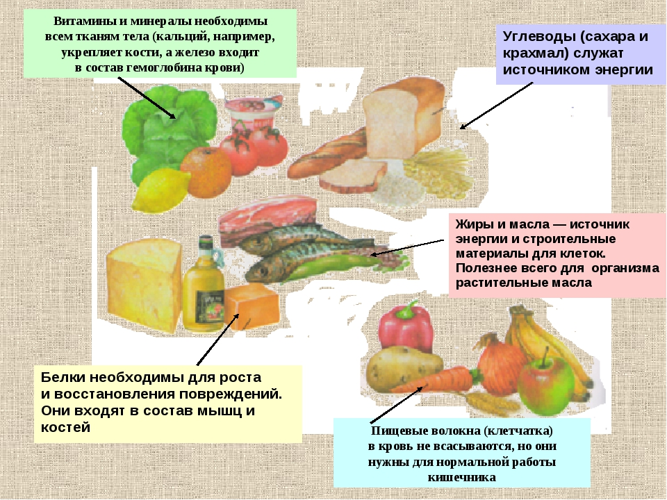 Витамины и минералы необходимы всем тканям тела (кальций, например, укрепляет...