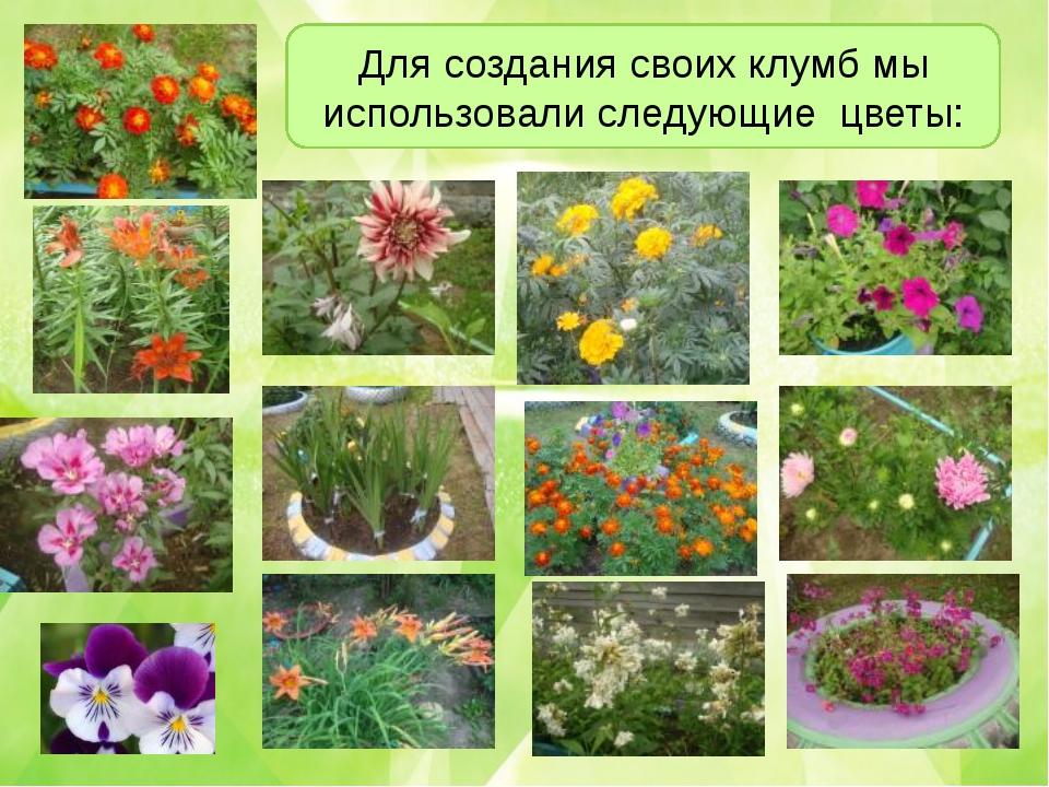 Для создания своих клумб мы использовали следующие цветы: