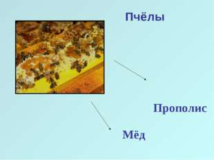 Пчёлы Прополис Мёд