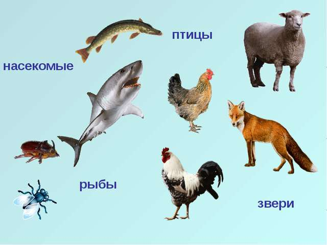 насекомые рыбы птицы звери