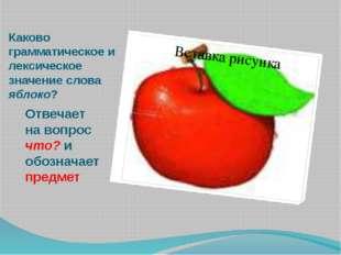 Каково грамматическое и лексическое значение слова яблоко? Отвечает на вопрос