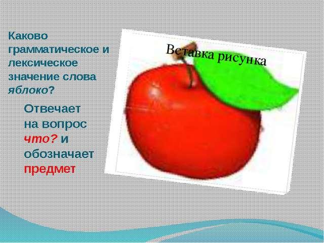 Каково грамматическое и лексическое значение слова яблоко? Отвечает на вопрос...