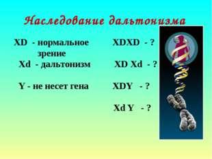 Наследование дальтонизма ХD - нормальное ХDХD - ? зрение Хd - дальтонизм ХD