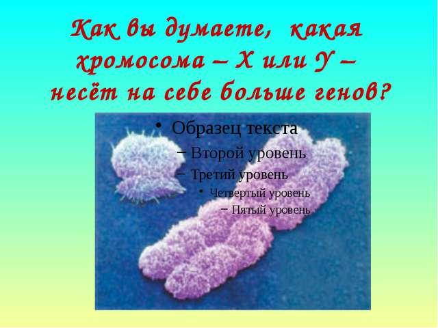Как вы думаете, какая хромосома – Х или Y – несёт на себе больше генов?