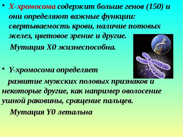 Х-хромосома содержит больше генов (150) и они определяют важные функции: све...