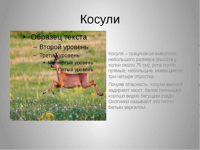 Косули Косуля – грациозное животное, небольшого размера (высота у холки около...
