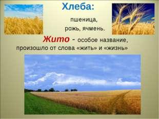 Хлеба: пшеница, рожь, ячмень. Жито - особое название, произошло от слова «жит