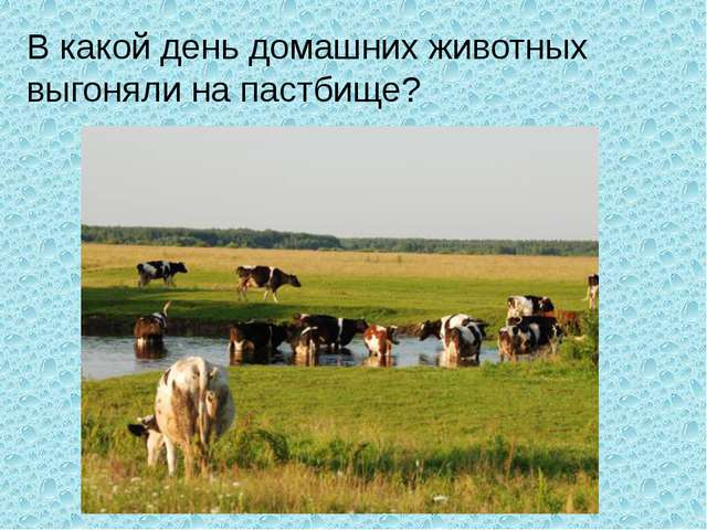 В какой день домашних животных выгоняли на пастбище?