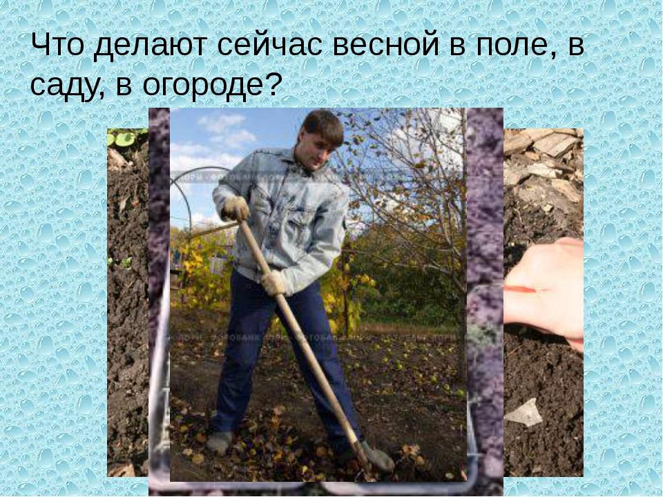 Что делают сейчас весной в поле, в саду, в огороде?
