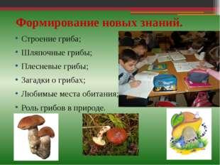 Формирование новых знаний. Строение гриба; Шляпочные грибы; Плесневые грибы;