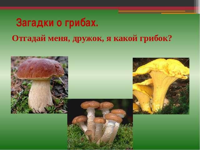 Загадки о грибах. Отгадай меня, дружок, я какой грибок?