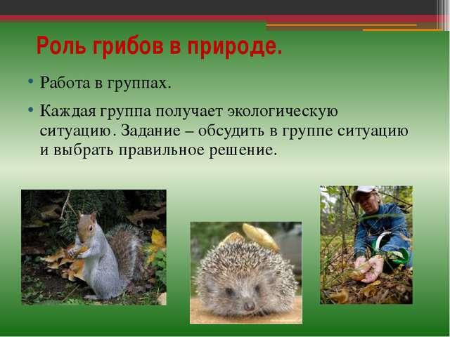 Роль грибов в природе. Работа в группах. Каждая группа получает экологическую...