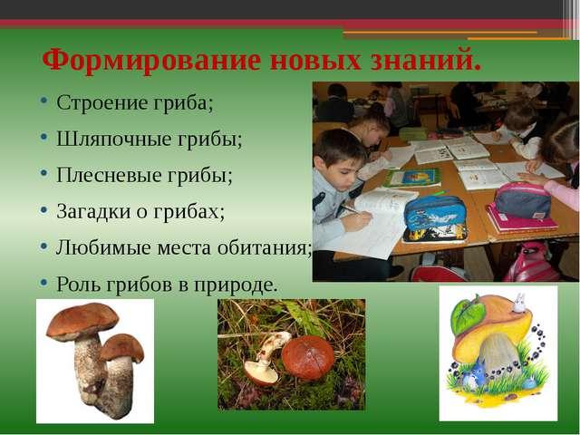 Формирование новых знаний. Строение гриба; Шляпочные грибы; Плесневые грибы;...