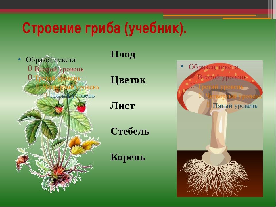 Строение гриба (учебник). Плод Цветок Лист Стебель Корень