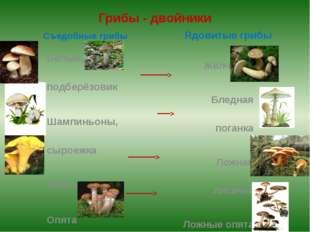 Грибы - двойники Съедобные грибы Белый, подберёзовик Шампиньоны, сыроежка Лис