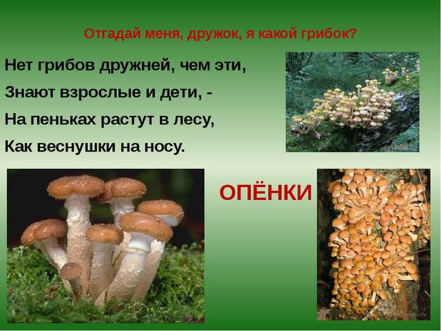 Отгадай меня, дружок, я какой грибок? Нет грибов дружней, чем эти, Знают взро...