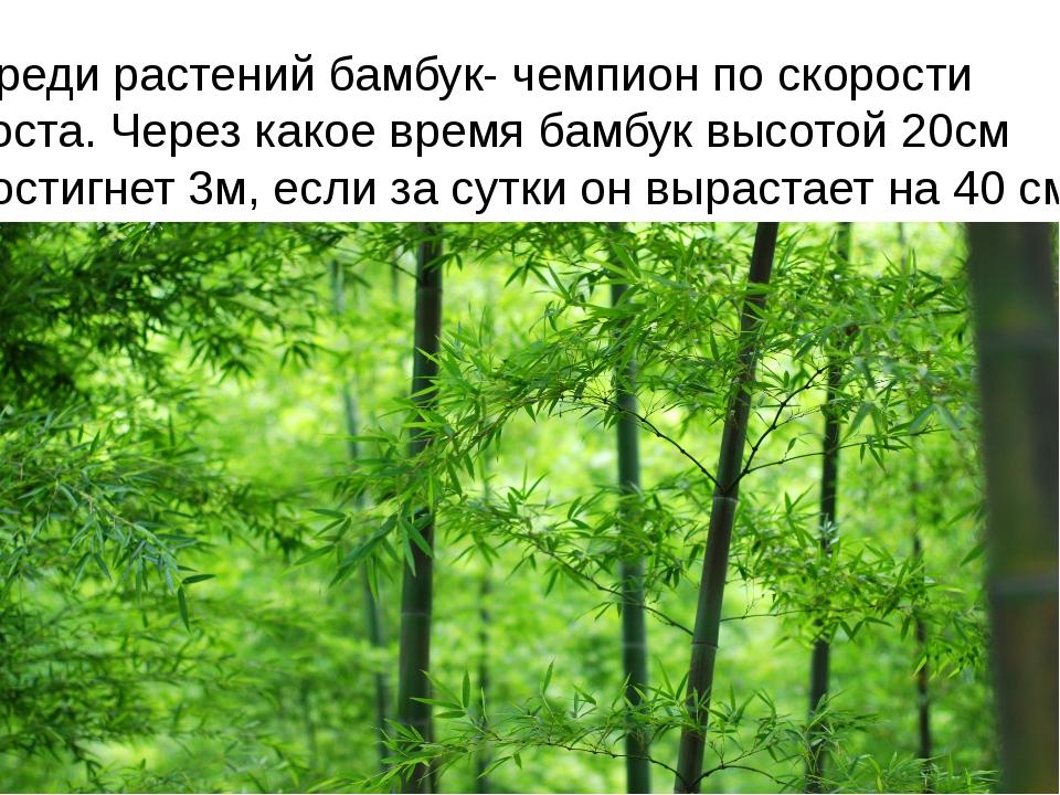 Среди растений бамбук- чемпион по скорости роста. Через какое время бамбук вы...