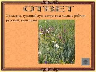 Хохлатка, гусиный лук, ветреница лесная, рябчик русский, тюльпаны.
