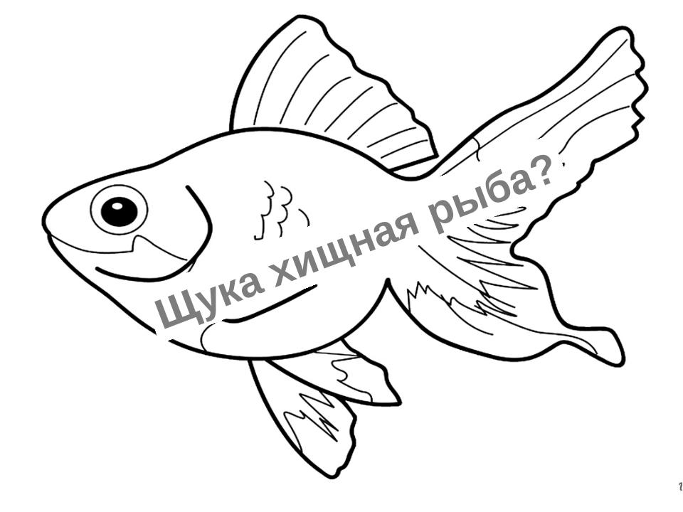 Щука хищная рыба?