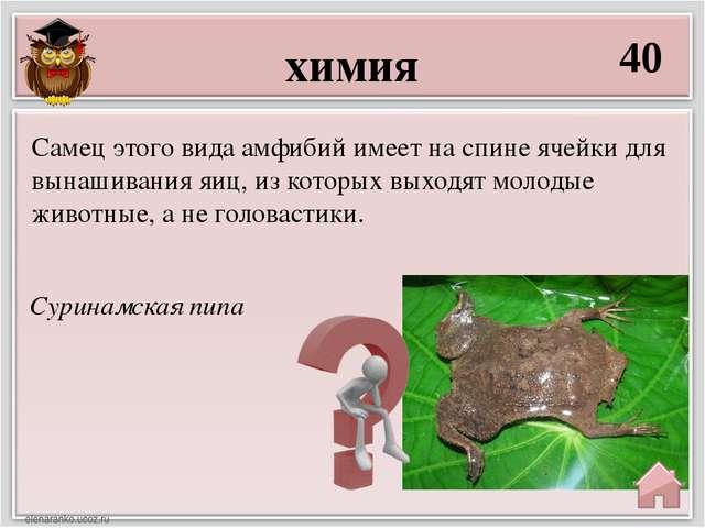 химия 40 Суринамская пипа Самец этого вида амфибий имеет на спине ячейки для...