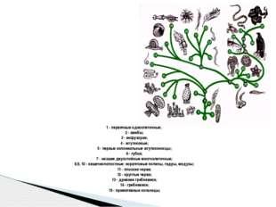 1 - первичные одноклеточные; 2 - амебы; 3 - инфузории; 4 - жгутиковые; 5 - пе