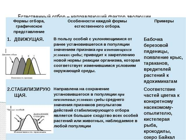 Естественный отбор – направляющий фактор эволюции Формы отбора, графическое п...