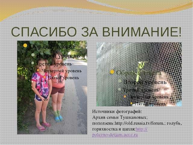 СПАСИБО ЗА ВНИМАНИЕ! Источники фотографий: Архив семьи Тушкановых; поползень:...