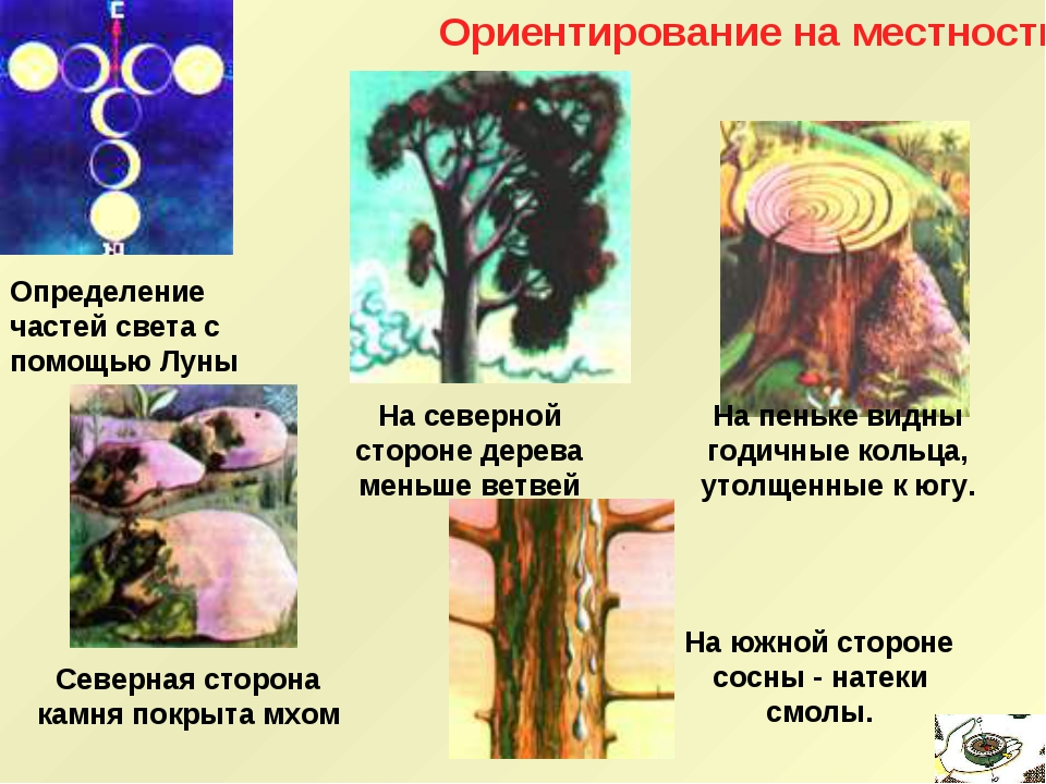 Ориентирование на местности Определение частей света с помощью Луны На северн...