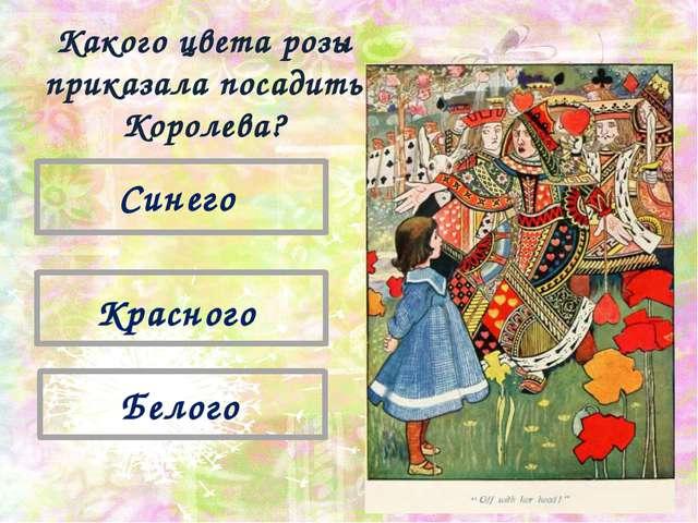 Красного Синего Белого Какого цвета розы приказала посадить Королева?