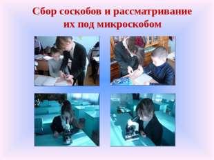 Сбор соскобов и рассматривание их под микроскобом
