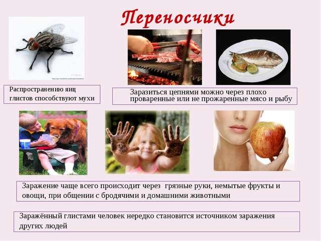 Переносчики Заражение чаще всего происходит через грязные руки, немытые фрук...