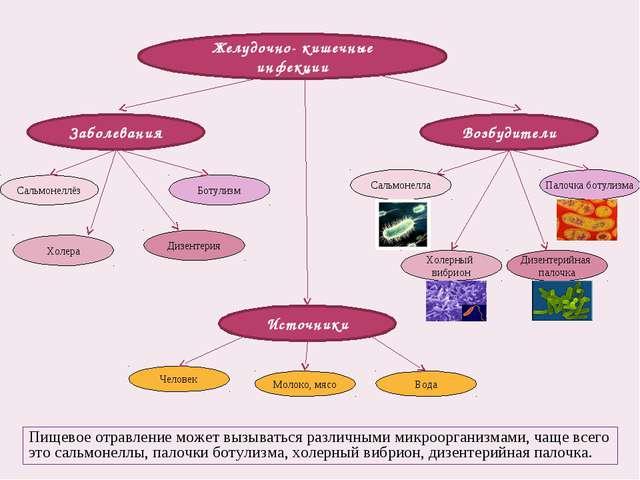 Желудочно- кишечные инфекции Заболевания Возбудители Источники Сальмонеллёз Б...