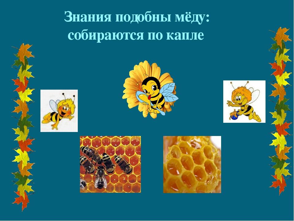 Знания подобны мёду: собираются по капле