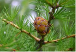 ekologicheskaya-tropatropinka-v-prirodu-severa (13)