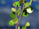 ekologicheskaya-tropatropinka-v-prirodu-severa (14)
