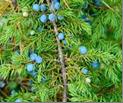 ekologicheskaya-tropatropinka-v-prirodu-severa (11)