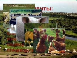 Предприятия сельского хозяйства и пищевой промышленности. ЗАО «Южский молочны