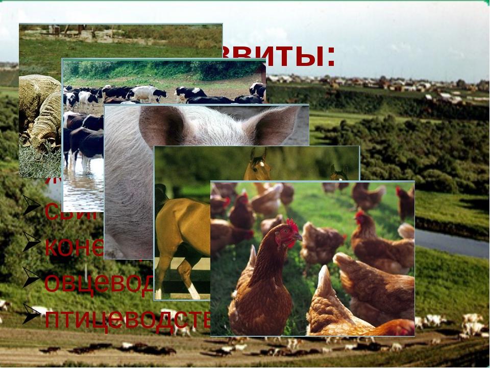 Предприятия сельского хозяйства и пищевой промышленности. ЗАО «Южский молочны...