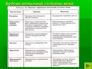 Будова аптычнай сістэмы вока: