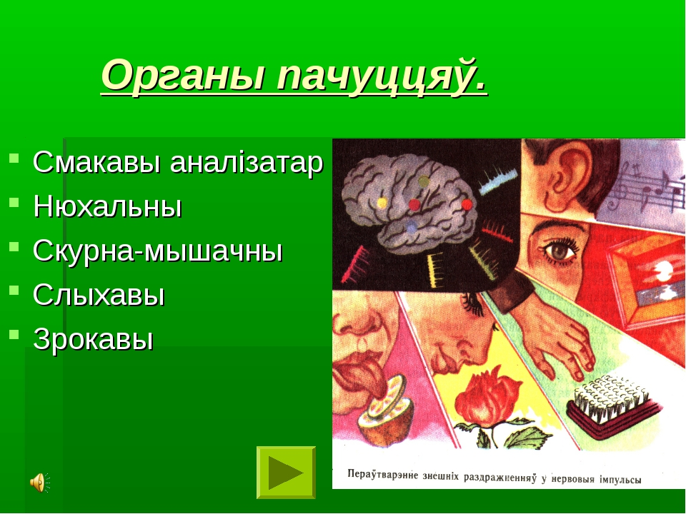 Органы пачуццяў. Смакавы аналізатар Нюхальны Скурна-мышачны Слыхавы Зрокавы