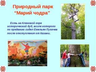 """Природный парк """"Марий чодра"""" Есть на Кленовой горе исторический дуб, возле ко"""