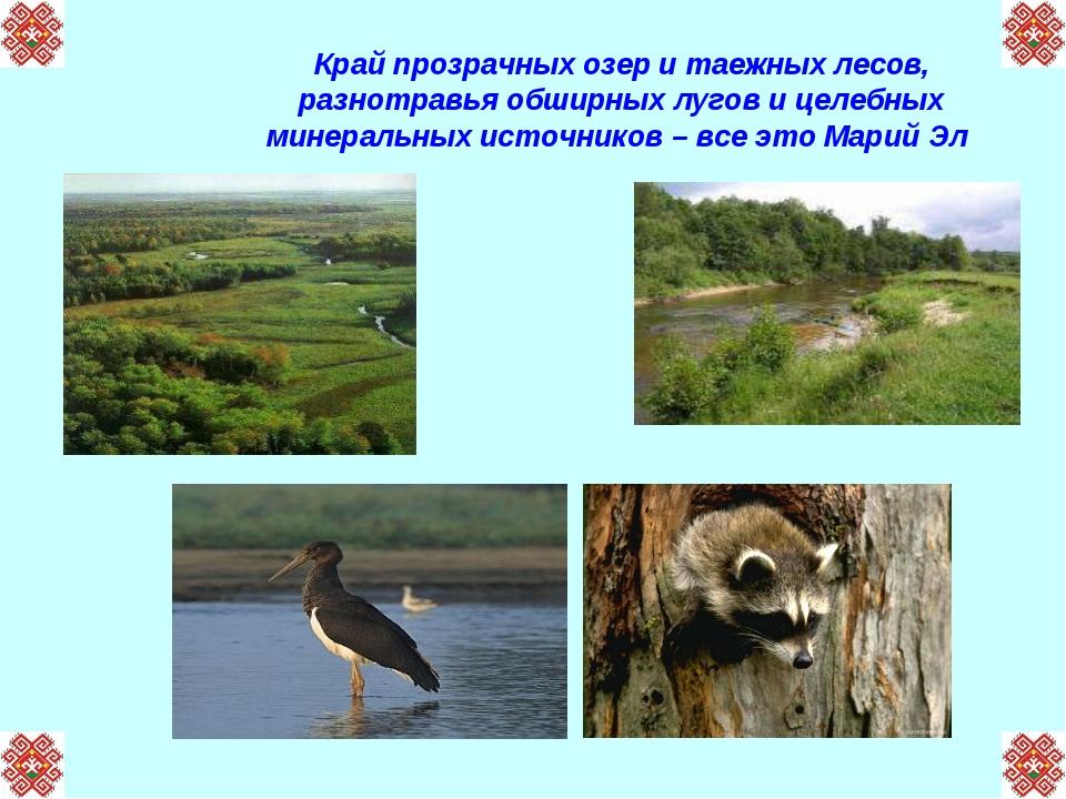 Край прозрачных озер и таежных лесов, разнотравья обширных лугов и целебных м...