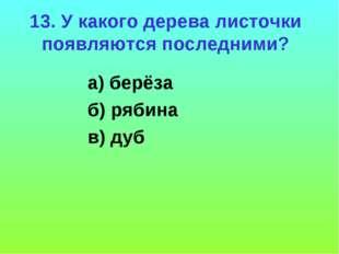 13. У какого дерева листочки появляются последними? а) берёза б) рябина в) дуб